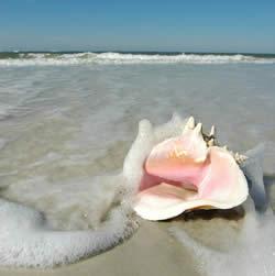 sunset beach shell